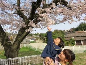 にこ原の桜